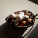 masseria-murgia-albanese-uova-biologiche - Copie (2)